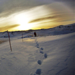 A person walking in the distance across the snow. The sun glows in the background. Image by Pedro Niada (April 2011).